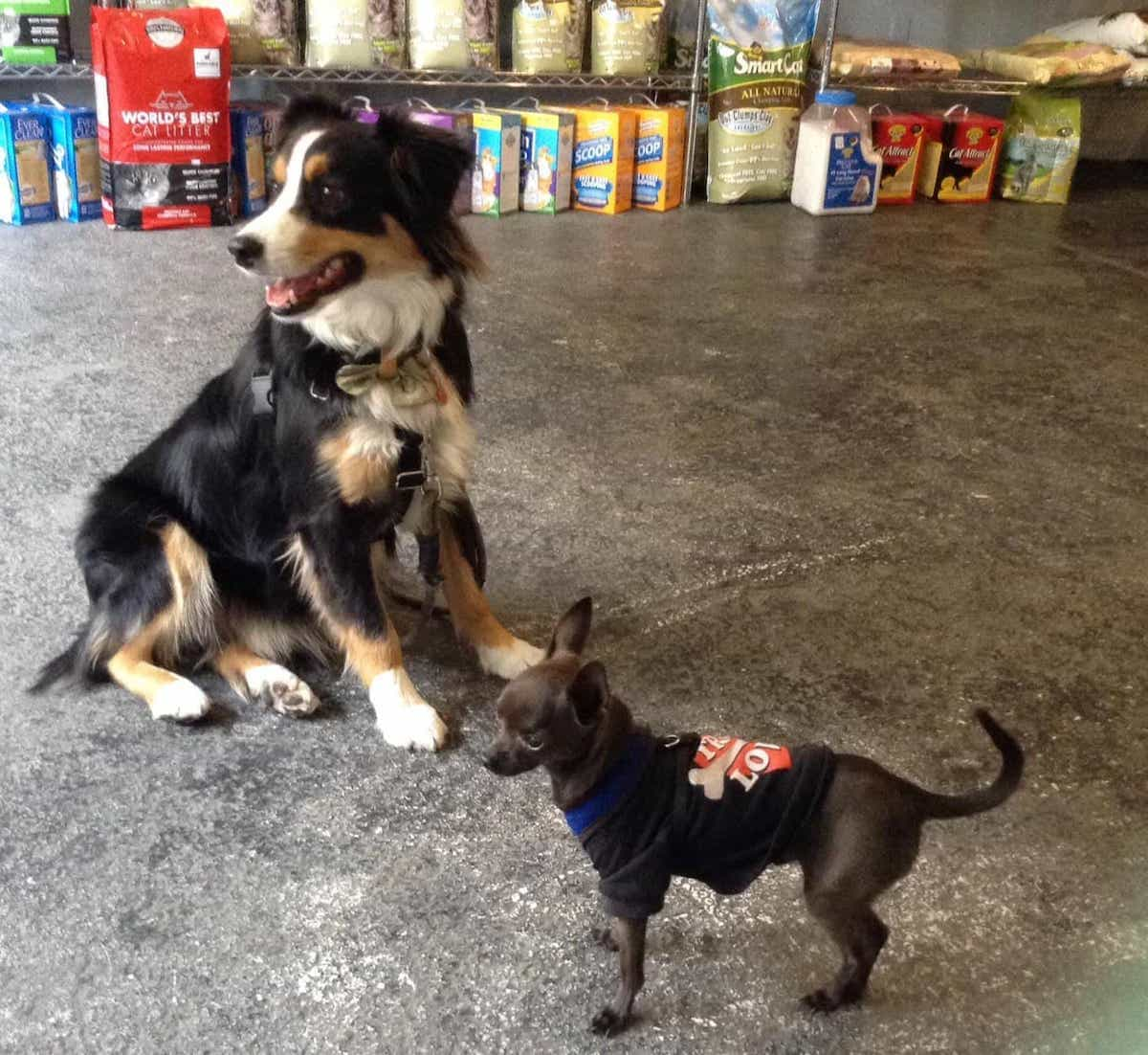 Two dogs, one little one big, in a pet store surrounded by dog and cat food